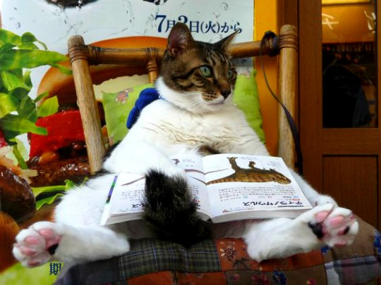 fat cat reading a book