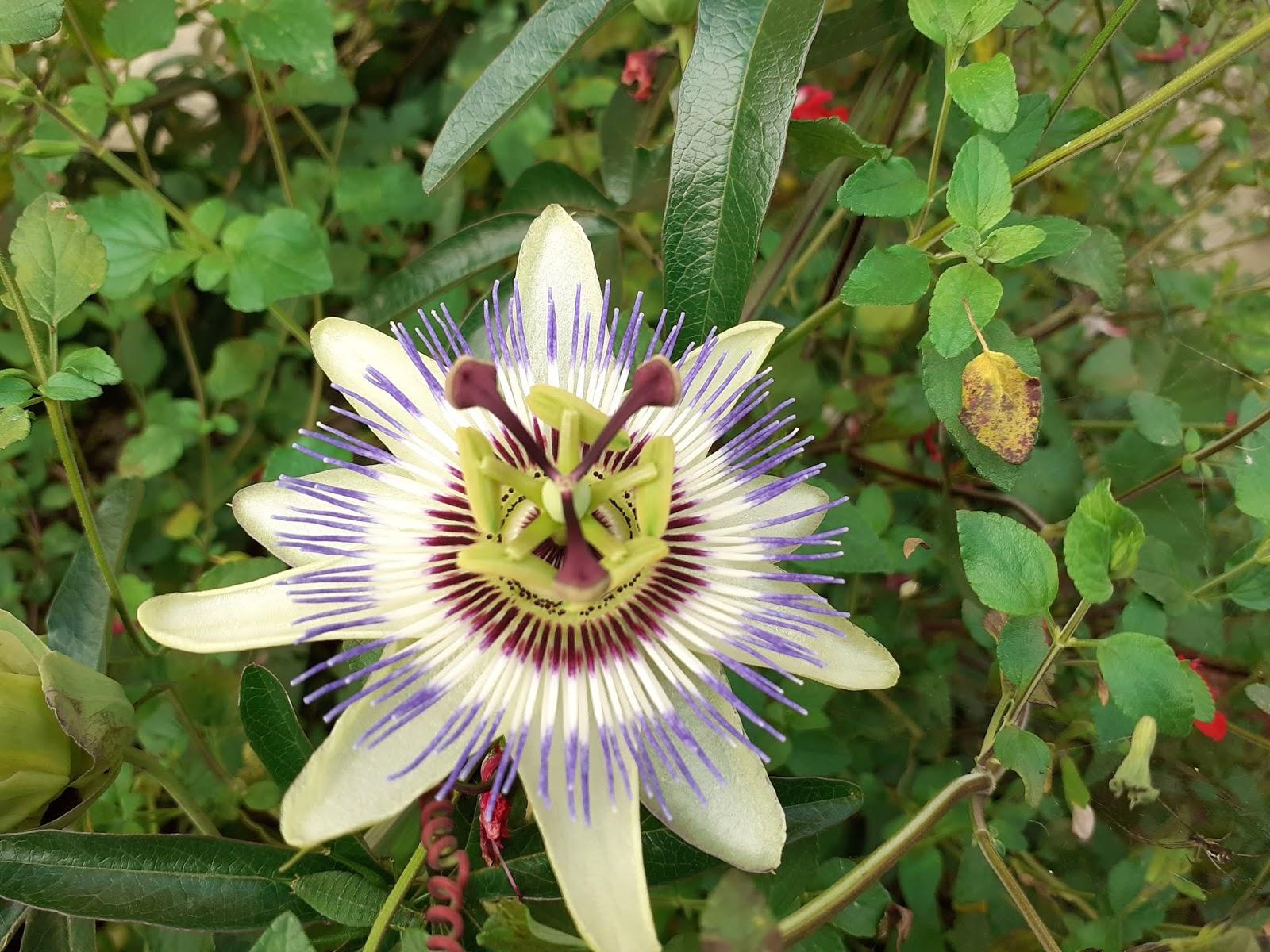 Plante A Planter En Septembre chambres d'hôtes au jardin des violettes : septembre 2019