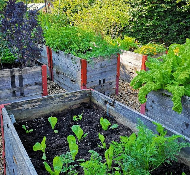 Gelebte Nachhaltigkeit in der Gastro