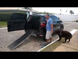 rampa para transporte em veículos de cães com cirurgia