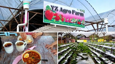 Yz agro farm ladang strawberry cameron