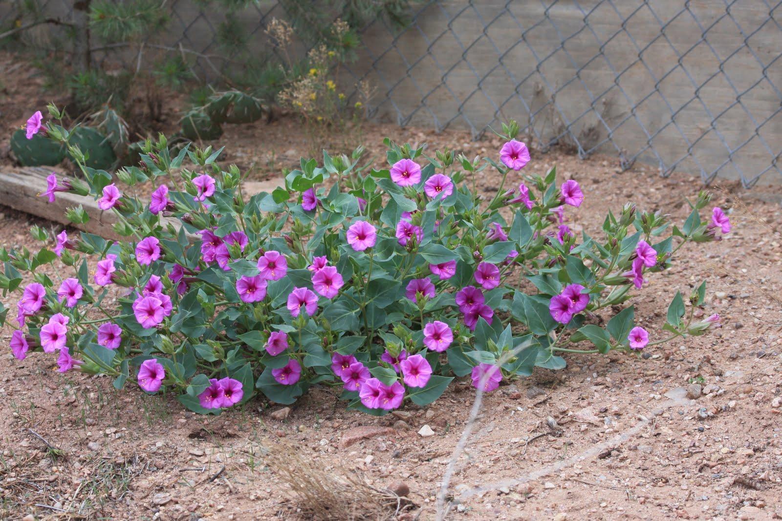 Phronesisaical: Desert Plants