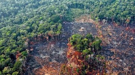 Υπάρχει περίπτωση ο Αμαζόνιος να γίνει σαβάνα;