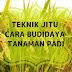 Teknik Jitu Budidaya Flora Padi