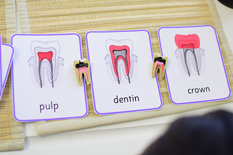 Dental Unit: What's Inside Your Tooth