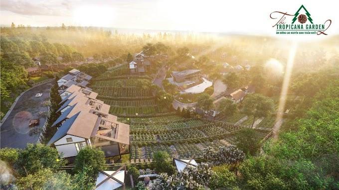 Ngắm bình minh vào mỗi buổi sáng ,vừa nhấp tách trà vừa săn mây tại The Tropicana Garden Bảo Lâm 2