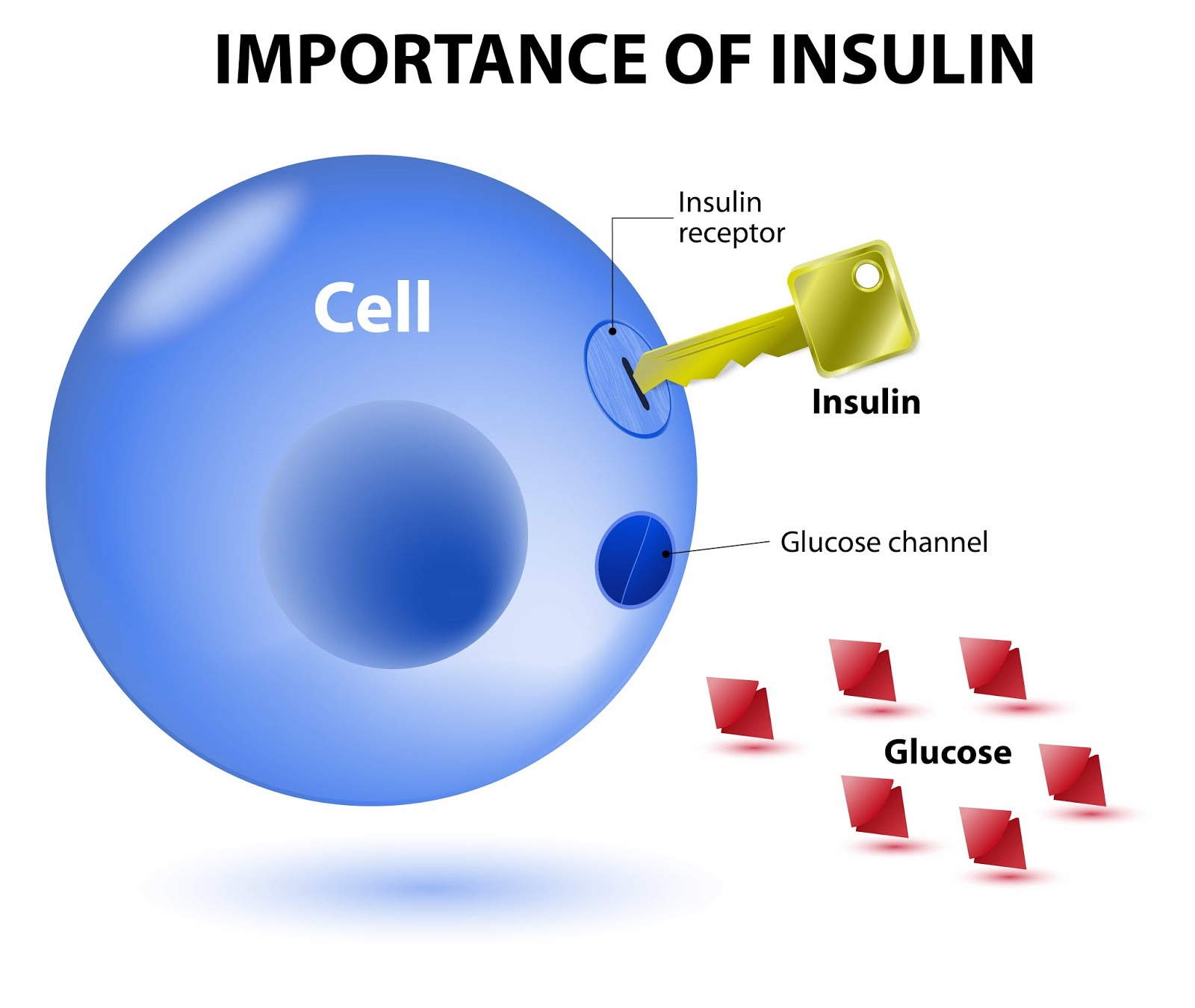 Insulin is a hormone made by the pancreas that allows our body to use sugar (glucose) from carbohydrates in the food that we eat for energy or to store glucose for future use.