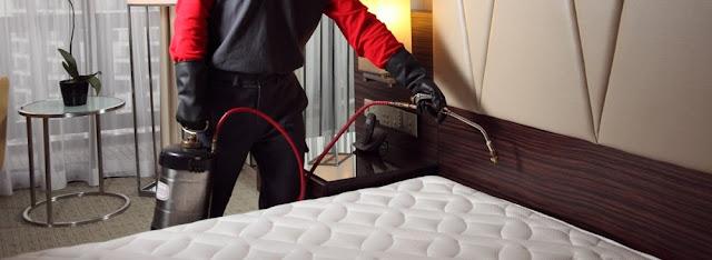 Bed Bugs Treatment Awesosmepestcontrol Awesomepest