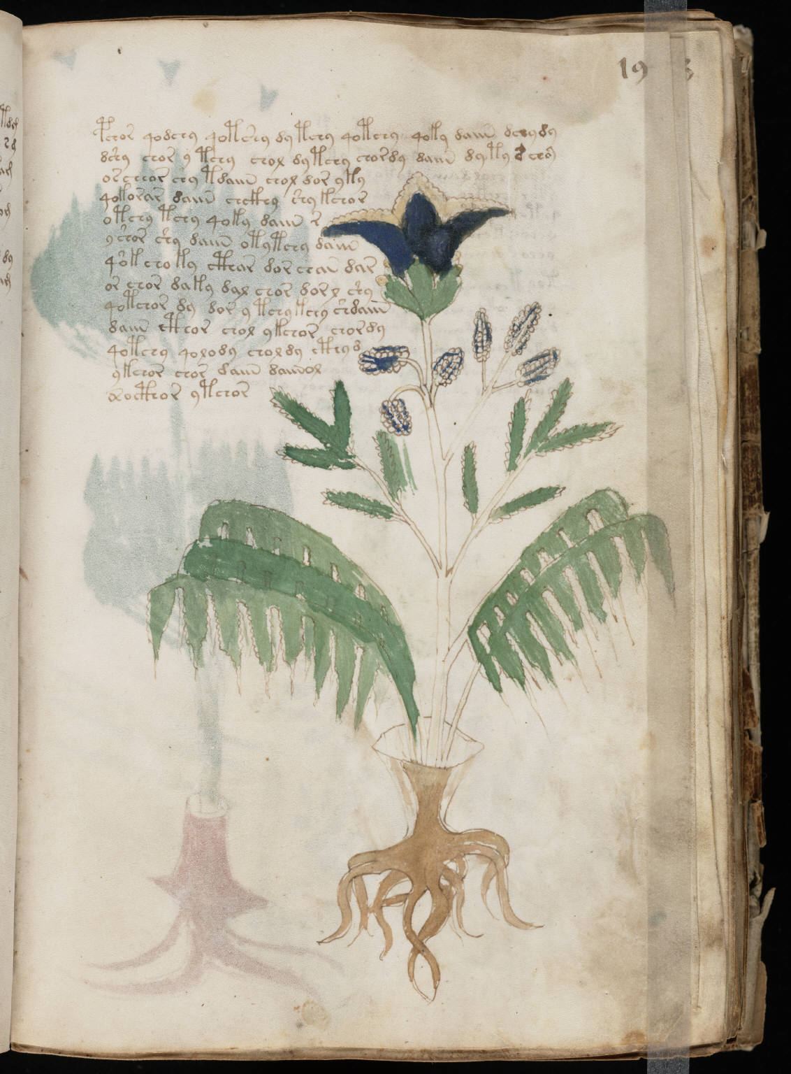 manuscrito037
