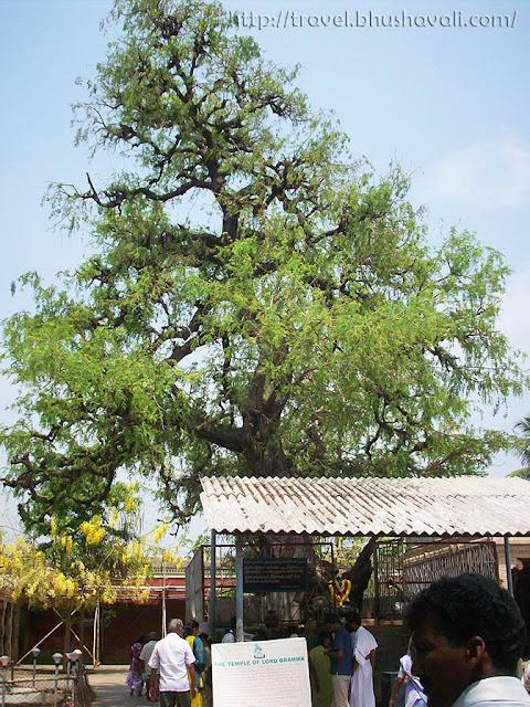 Brahma Vishnu Sivan temple at Kodumudi. Vanni Tree sthalavruksham