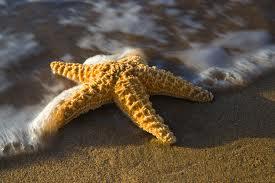 Bir Deniz Yıldızı Hikayesi 10