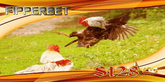 aduan ayam s128