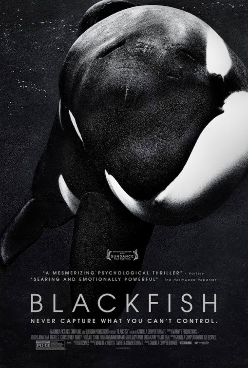 blackfish-sea-shepherd