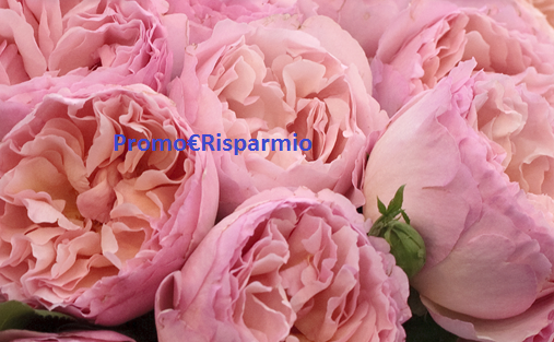 catalogo rose