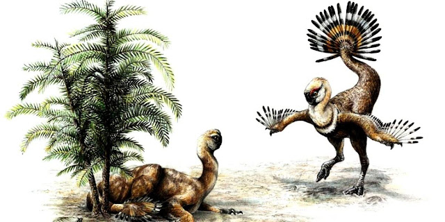 Dinosaur Feathers Evolved for Sexual Display