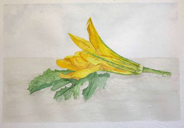 gouache painting of zucchini flower and leaves on watercolour paper, artist Linzé Brandon