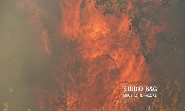 Σε πολύ υψηλό κίνδυνο η Αργολίδα και την Παρασκευή για πυρκαγιές