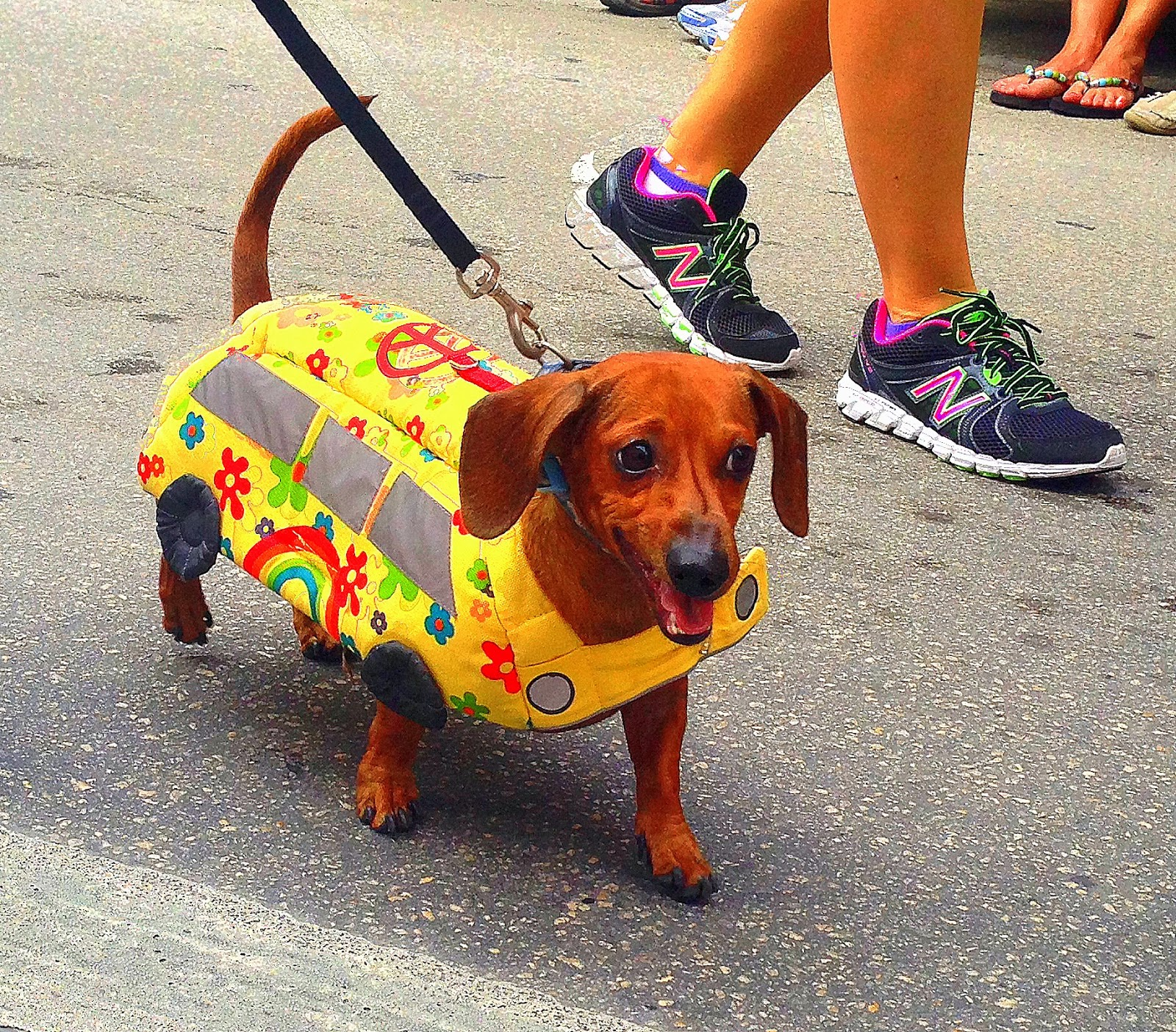 Come Home to Paradise: Walking in a Wiener Wonderland