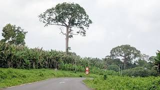 Bioko is one of the five small islands beside Corisco, Annobón, Elobey Chico and  Elobey Grande