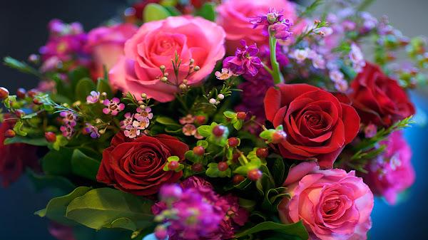 gambar wallpaper mawar