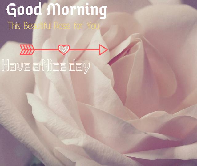 Beautiful White Rose Good Morning Images
