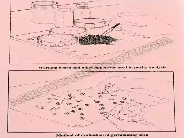 बीज परीक्षण क्या है इसके उद्देश्य, महत्व एवं बीज परीक्षण करने की विधियां, बीज परीक्षण की परिभाषा, बीज परीक्षण कैसे किया जाता है, Agriculture Studyy