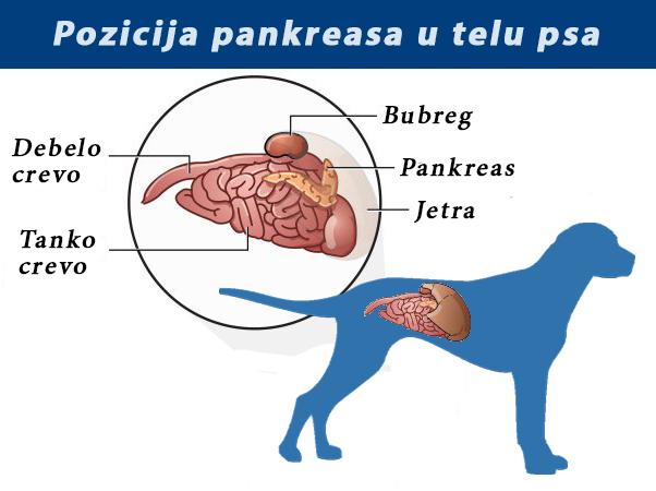 parazitoza pankreasa