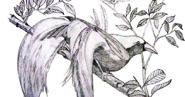 Burung cendrawasih hitam putih