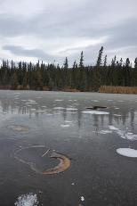Οι φυσαλίδες μεθανίου σηματοδοτούν μια λίμνη όπου το μόνιμα παγωμένο υπέδαφος λιώνει και γρήγορα απελευθερώνει αέρια θερμοκηπίου στην ατμόσφαιρα.