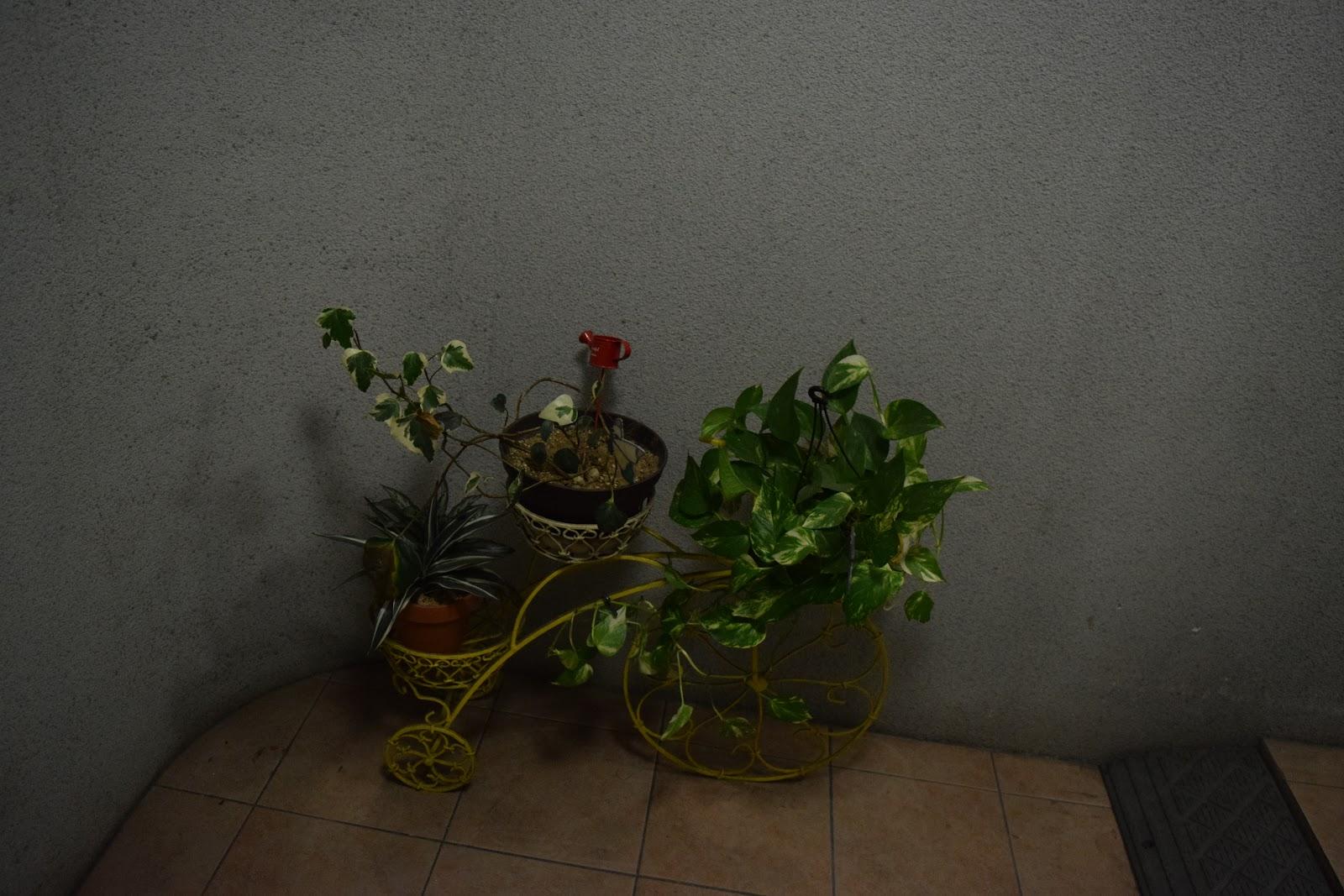 cute plants in Shimokitazawa Tokyo