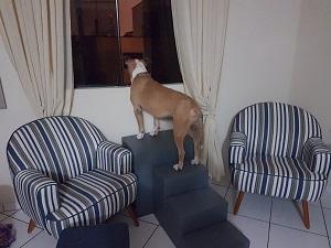 cães de grande porte na janela
