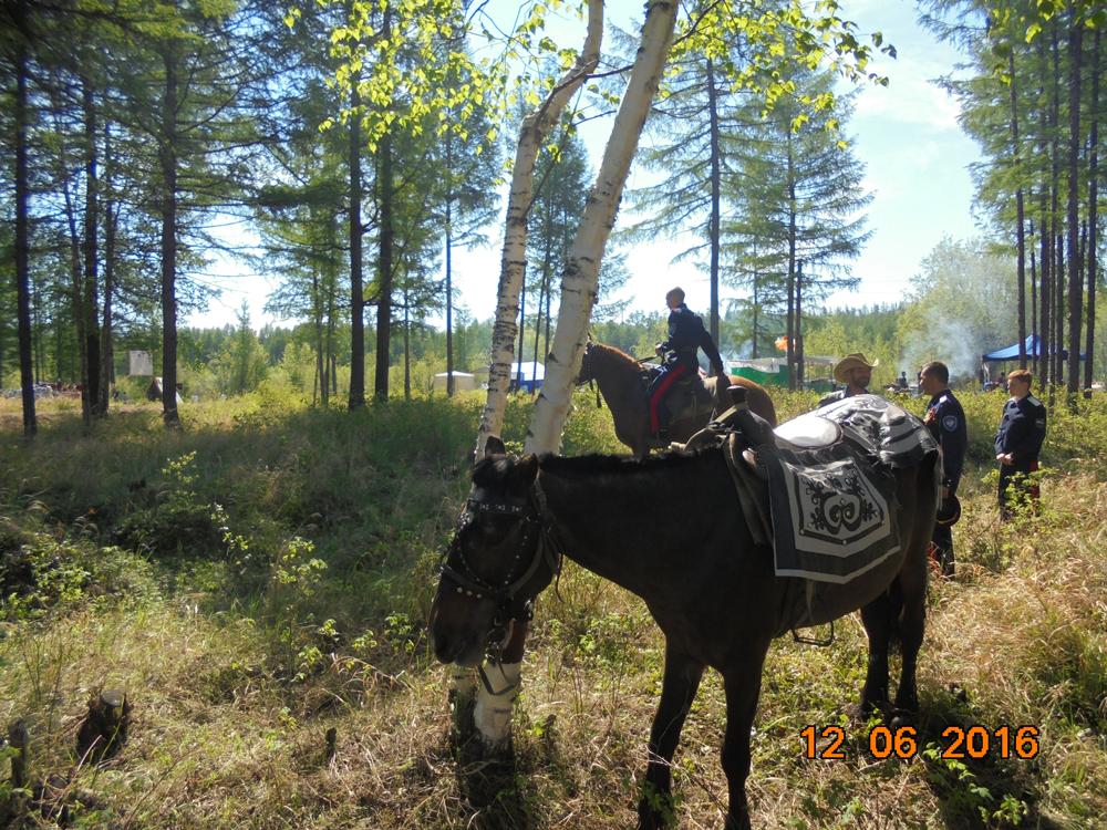 Лошади и казаки. Лошади -вышколенные и добрейшие!