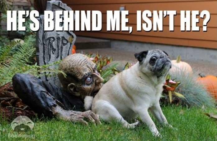 Halloween Memes & Jokes