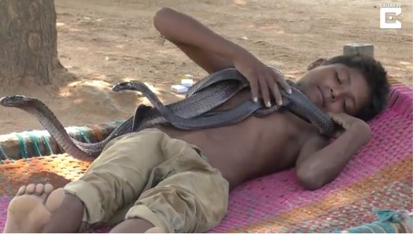 SHOCKING: The Unbelievable Story Of 7-Year-Old Boy Who Sleeps, Bathes And Plays With Deadly Snakes (Video)