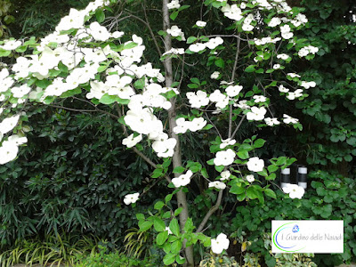 Il giardino delle naiadi giardini di piccole dimensioni - Alberi giardino piccolo ...