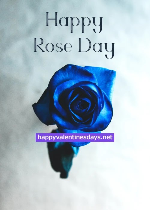 Happy Rose Day 2021 : Images Wishes Quotes HD Photos Pics Messages Greetings GIF and WhatsApp DP