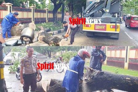 Kabid Humas, Inilah Gerak Cepat Patroli Dit Samapta Polda Sulsel Evakuasi Pohon Tumbang