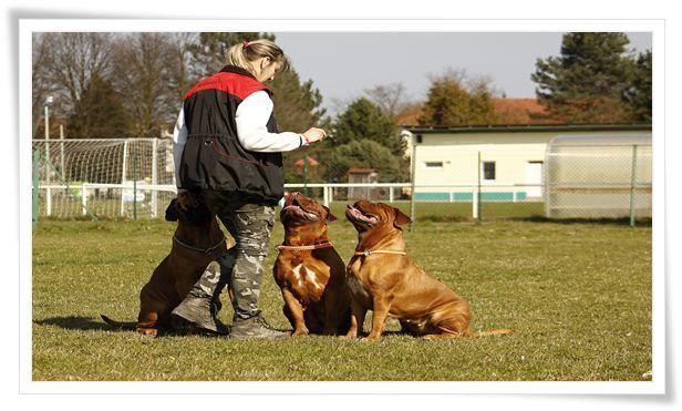dog leash training near me