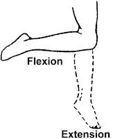 ROM lutut dengan gambar