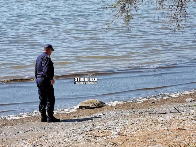 Η κακοκαιρία ξεβράζει στις ακτές νεκρές θαλάσσιες χελώνες