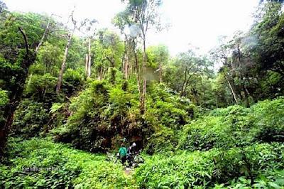 Khám phá khu du lịch rừng tự nhiên Bằng Tạ Ba Vì