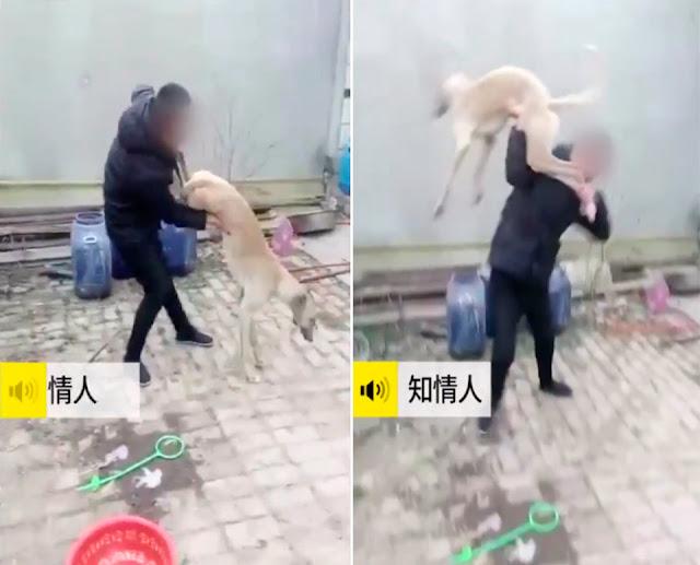 Очевидцы сняли на видео, как хозяин жестоко наказывает собаку