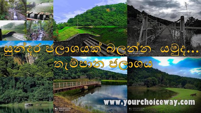 සුන්දර ජලාශයක් බලන්න යමුද... - තැම්පාන ජලාශය ❤🌳🌱🎋🍃 (Thampana) - Your Choice Way