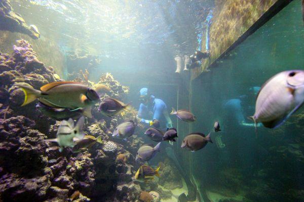 Aquário Recifal do Coral Vivo - Vitrine da Costa