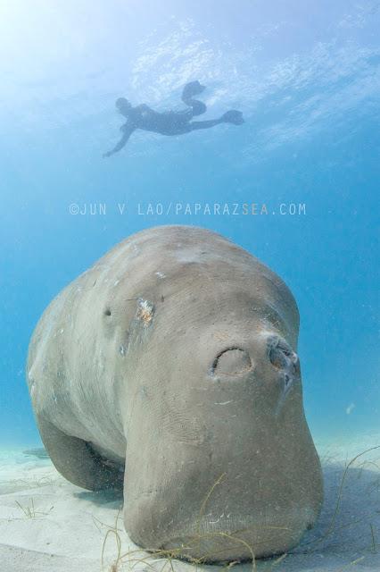 Scuba Diving, Underwater Photography, Coron Scuba, Diving Coron Palawan, Wildlife