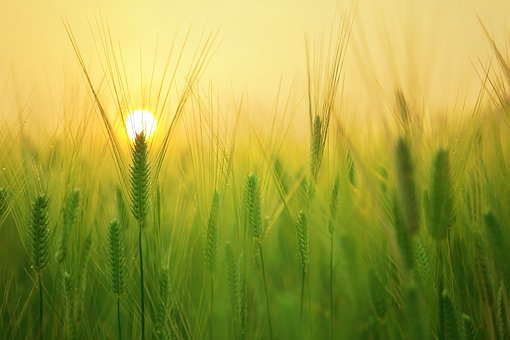 Agriculture Farming & Natural Farming
