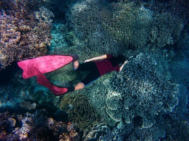 Peralatan Penting saat Snorkeling