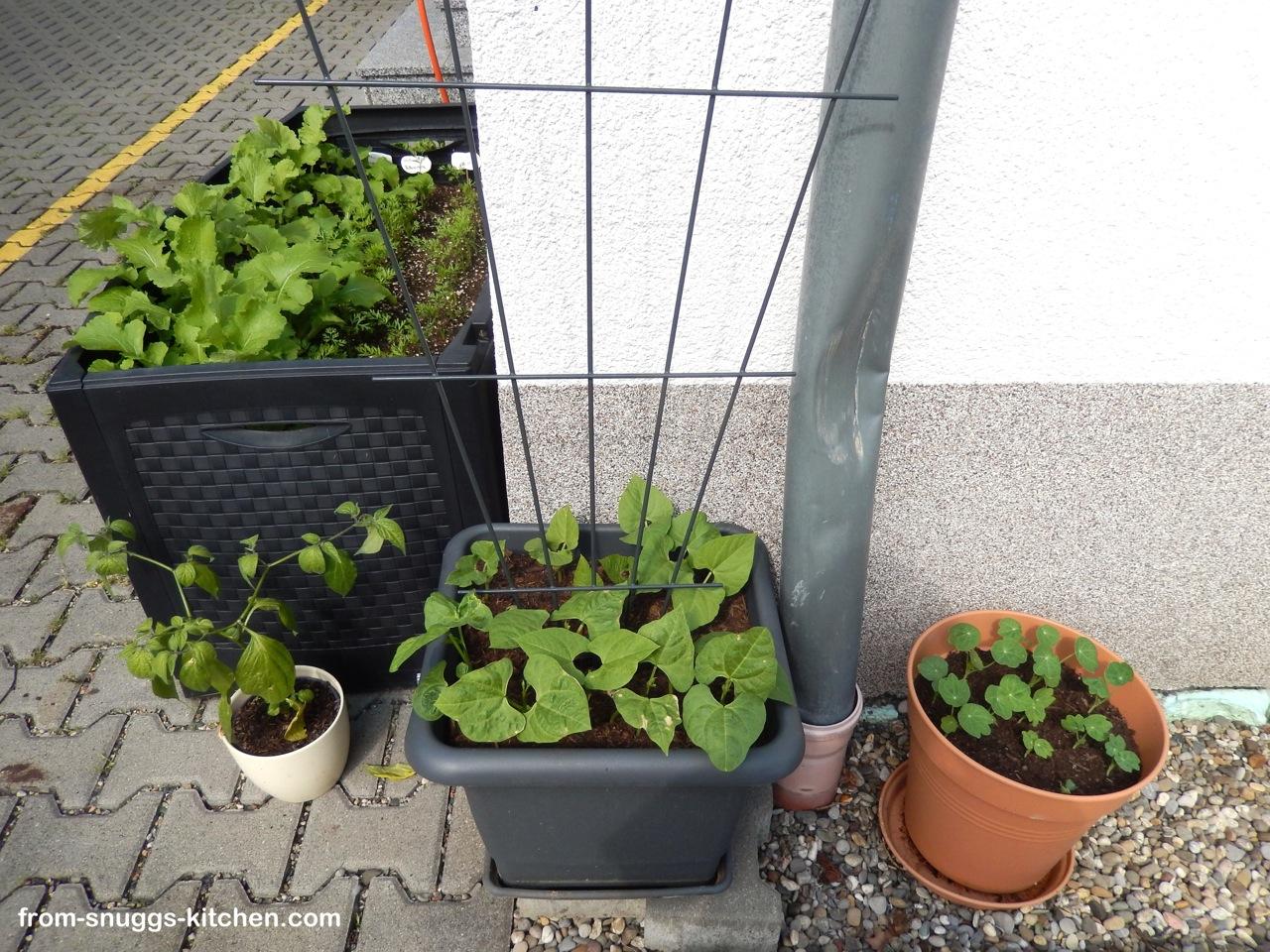 Balkon Garten Die Erste 2014 From Snuggs Kitchen