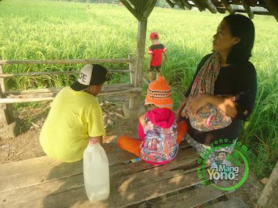 FOTO 2 :  Bersama Keluarga Melihat Padi NAZWA 58 HST   di Sawah Rawa Sudah Matang Susu