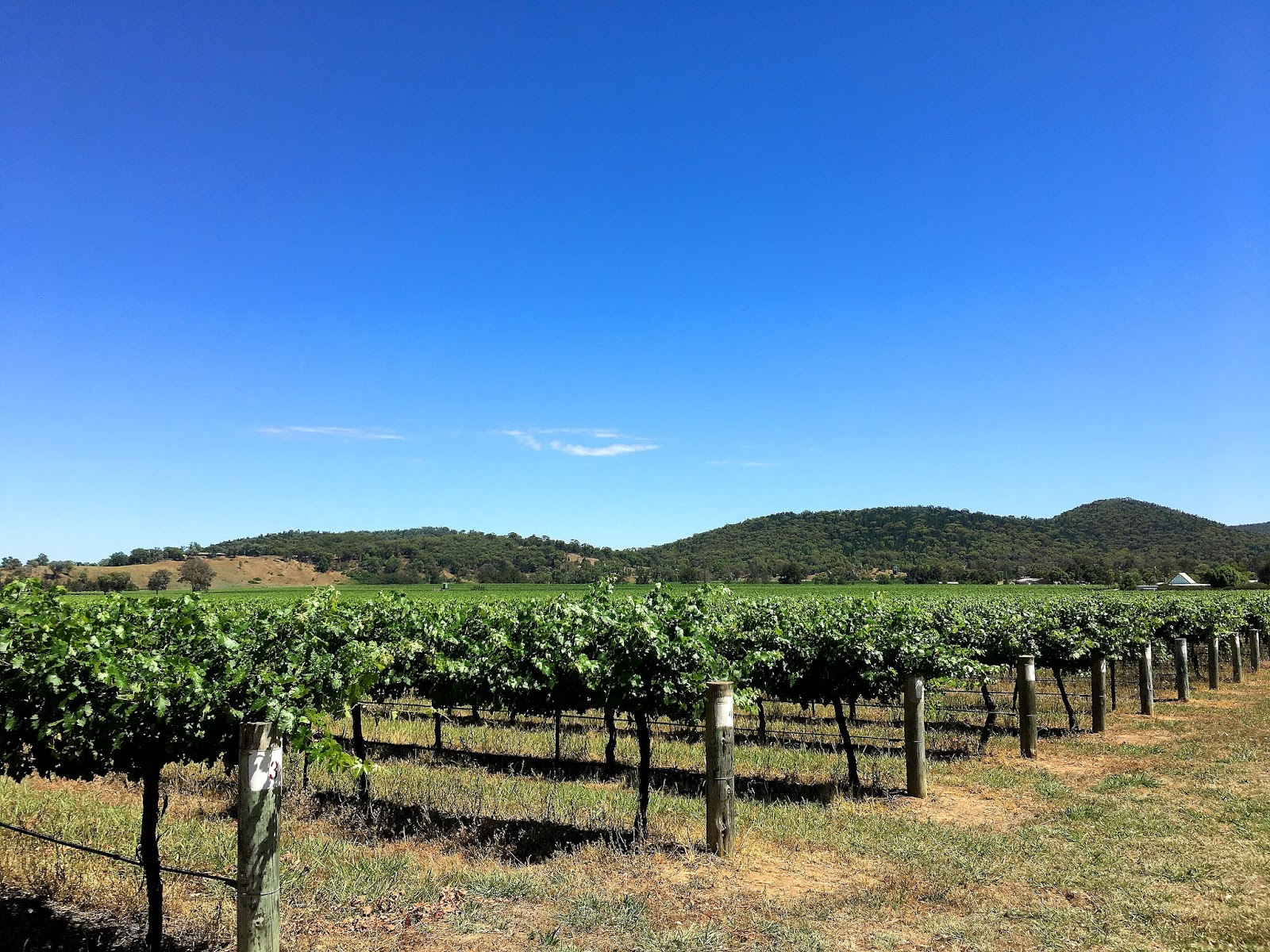 Come along with me for a day in Mudgee wine region in the Australian state of NSW where I discover the hidden gems of Mudgee Cellar Doors and Wineries.